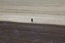 Lompoc, California, USA: An irrigator in a field of young broccoli plants. - David Bacon - American,2010s,2013,agricultural,agriculture,America,American,americans,BAME,BAMEs,BME,bmes,broccoli,by hand,California,capitalism,capitalist,casual workers,Diaspora,diversity,EARNINGS,EBF,Economic,Ec