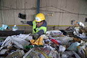 California- Workers sorting paper, cardboard, plastic, glass and metal from trash collected in Oakland. California Waste Solutions sorting facility. - David Bacon - American,2010s,2015,America,American,americans,belt,by hand,California,capitalism,capitalist,cardboard,conveyer,CWS,dirt,EBF,Economic,Economy,FACTORIES,factory,garbage,glasses,gloves,goggles,hard hat,