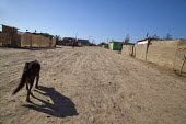 Mexico, Baja California Norte, accommodation at Rancho Los Pinos. A dog walking down the dirt road. The workers in Los Pinos are almost all indigenous Mixtec and Triqui migrants from Oaxaca, in southe... - David Bacon - 05-06-2015