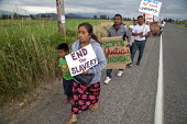 End the slavery. Migrant Mexican Farm workers demanding Trade Union recognition march to Sakuma Farms, a large berry grower in Washington. The workers and their supporters are demanding that the compa... - David Bacon - 11-07-2015