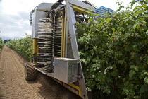 A harvestor picking raspberries mechanically on a farm in Lynden, Washington USA - David Bacon - 12-07-2015