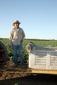 Foreman of a crew of Mexican migrant workers picking bell peppers, Chowchilla, California, USA - David Bacon - 19-07-2007