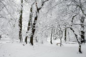 Heavy Snowfall, London. - Duncan Phillips - 2000s,2009,cities,city,CLIMATE,conditions,eni,environment,Environmental Issues,Heavy,ice,london,nature,outdoors,Park,parks,precipitation,snow,snowfall,tree,trees,urban,wea,weather,winter,wood,woodland