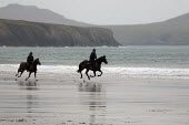 Rider and horse galloping on the Beach, Whitesands, Pembrokeshire, Wales. - Duncan Phillips - 13-04-2009