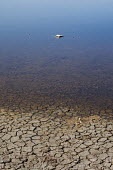 Dead Bird floating in a dried up lake. - Duncan Phillips - ,2000s,2009,animal,animals,bird,birds,country,countryside,cracked,dead,Dried Up,drought,dry,eni,environment,Environmental degradation,Environmental Issues,eu,Europe,european,europeans,eurozone,floatin