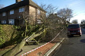 Storm damage caused by high winds, London. - Duncan Phillips - 19-01-2007
