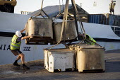Unloading fresh fish at the quayside, Penzance, Cornwall - Duncan Phillips - 30-08-2010