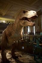 Model of T REX dinosaur, Natural History Museum, London - Duncan Phillips - 24-10-2007