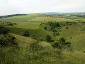 Chalk downlands, Part of the Ridgeway long distance footpath, Chiltern hills - Duncan Phillips - 23-06-2005