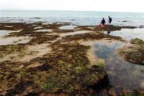 Children rock pooling on the beach Studland bay Dorset. - Duncan Phillips - 2000s,2004,beach,BEACHES,child,CHILDHOOD,children,COAST,coastal,coasts,holiday,holiday maker,holiday makers,holidaymaker,holidaymakers,holidays,juvenile,juveniles,kid,kids,leisure,LFL leisure,OCEAN,pa