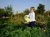Child watering vegetables in an allotment, London - Duncan Phillips - 18-06-2005