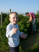 Child and Grandmother raspberry picking, at an allotment, London. - Duncan Phillips - 18-06-2005