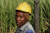 A worker at a Sugarcane farm, which employs mainly migrant workers. At St.Lucia, on South Africa's east coast. - Gerry McCann - 2000s,2005,AGRICULTURAL,agriculture,arable,cane,capitalism,capitalist,crop,crops,Diaspora,EBF Economy,EMOTION,EMOTIONAL,EMOTIONS,employee,employees,Employment,farm,Farm Worker,farm workers,farmed,farm
