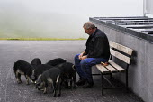 A man feeds pigs in Austrias Zillertal region in the Tyrol. - Gerry McCann - 2000s,2009,agriculture agricultural,animal,animal animals,animals,Austria,austrian,austrians,bench benches,bread breads,capitalism,capitalist,country,countryside,domesticated ungulate,domesticated ung