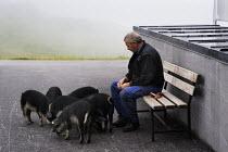 A man feeds pigs in Austrias Zillertal region in the Tyrol. - Gerry McCann - 03-08-2009