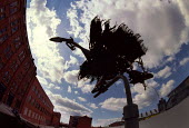 Sculpture of a bird made from found scrap objects by inner city canal, Manchester - Paul Herrmann - 05-01-1996
