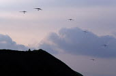 Hang gliders above a hill at sunset, the Derbyshire peak district, UK. - Paul Herrmann - 19-01-2003