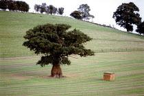 Oak tree in a field with a straw bail. Farm in Oxfordshire. - John Harris - 15-09-2001