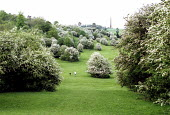 Walking the dog on the hills in spring. May blossom, creating tree pollen abounds. - John Harris - 01-05-2002