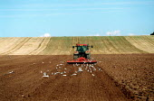 Tractor ploughing a field. - John Harris - 2000s,2002,AGRARIAN,AGRICULTURAL,agriculture,animal,animals,arable,bird,birds,capitalism,capitalist,Cereals,country,countryside,crop,crops,EARNINGS,EBF economy,economic,economy,EQUALITY,farm,Farm Work