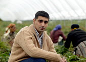 Zad Padda with pickers on a strawberry farm in the Vale of Evesham. He is working with The Ethical Trading Initiative to set up a licensing and registration scheme for Gangmasters to try and regulate... - John Harris - 2000s,2006,AGRICULTURAL,agriculture,arable,asian black,BME black,capitalism,capitalist,casual,countryside agricultural,crop,crops,Diaspora,EARNINGS,EBF economy,employment agencies,employment agency,EQ