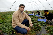 Zad Padda with pickers on a strawberry farm in the Vale of Evesham. He is working with The Ethical Trading Initiative to set up a licensing and registration scheme for Gangmasters to try and regulate... - John Harris - 2000s,2006,AGRICULTURAL,agriculture,arable,asian black,BME black,casual,countryside agricultural,crop,crops,Diaspora,EARNINGS,EBF economy,employment agencies,employment agency,EQUALITY,ethnic,ETHNICIT