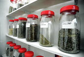 Jars of dried herbal extracts in the consulting room of a medical herbalist. - John Harris - 20-02-2000
