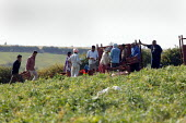 Gangmaster and workers picking peas in Wawickshire - John Harris - 06-09-2005