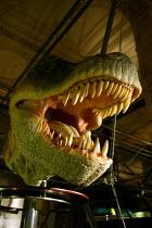 The Natural History Museum, London. A model of a Tyrannosaurus rex head. - John Harris - 29-08-2005