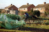 Retired man digging a vegetable patch on his allotment. - John Harris - 18-01-2006