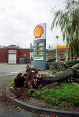 Tree blown down in gales. - John Harris - ,2000,2000s,Climate Change,damage,diesel,ENI environmental issues,Environment,Extreme,filling,filling station,fossil,fuel,fuels,gale,Global Warming,nature,oil,petrochemical,petrol,petrol station,servi
