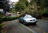 Storm damage, tree blown over in gales crashed ontop of a parked car, Crouch End, London - John Harris - 2000,2000s,AUTO,AUTOMOBILE,AUTOMOBILES,AUTOMOTIVE,car,cars,cities,city,claims,CLIMATE,Climate Change,conditions,damage,damaged,disruption,ENI environmental issues,Environment,Extreme,fallen,gale,gales