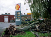 Tree blown down in gales. - John Harris - ,2000,2000s,CLIMATE,conditions,damage,diesel,ENI environmental issues,Environment,Extreme,filling,filling station,fossil,fuel,fuels,gale,Global Warming,nature,oil,petrochemical,petrol,petrol station,s