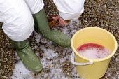 Maff Vet and Animal Health Officer disinfecting Wellington boots to stop any spread of infection before making a farm inspection for symptoms of foot and mouth disease. - John Harris - 28-03-2001