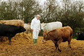 MAFF Vet inspecting a herd of cattle for symptoms of foot and mouth disease on a farm. - John Harris - 28-03-2001