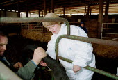 Maff Animal Health Officer and farmer taking a cow's tempature whilst carrying out an inspection, checking for symptoms of foot and mouth disease on a farm in an at risk area. - John Harris - 28-03-2001