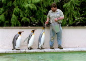 Keeper feeding fish to King Penguins, Penguin enclosure Bourton on the Water Bird Gardens. - John Harris - 11-03-2002