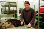 Staff picking out seedlings for planting in greenhouses at Horticulture Research International. HRI Wellesbourne, Warwickshire - John Harris - 13-04-2003
