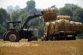 Farmworker driving a tractor and trailer, bringing in the harvest. Warwickshire. - John Harris - 06-08-2003