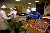 Packhouse workers packing strawberries from farms in the Vale of Evesham. Fusion Personel are working with The Ethical Trading Initiative to set up a licensing and registration scheme for Gangmasters... - John Harris - 2000s,2003,agricultural,agriculture,asian,BAME,BAMEs,black,BME,bmes,capitalism,capitalist,casual,country,countryside,crop,crops,Diaspora,diversity,EARNINGS,EBF,Economic,Economy,employment agencies,emp