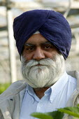 Mr Makhan Singh Padda. gangmaster and farmer, on his strawberry farm in the Vale of Evesham. Fusion Personel are working with The Ethical Trading Initiative to set up a licensing and registration sche... - John Harris - 2000s,2003,agricultural,agriculture,arable,asian,ASIANS,BAME,BAMEs,black,BME,bmes,capitalism,capitalist,casual,country,countryside,crop,crops,Diaspora,diversity,EARNINGS,economic,economy,employment ag