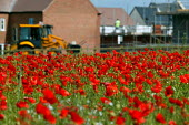 A field of poppies as new houses are constructed on a greenfield site on the edge of town. Stratford on Avon. - John Harris - 28-06-2004