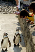 Boys visiting the zoo, penguin enclosure, Cotswold Wildlife Park - John Harris - 31-05-2007