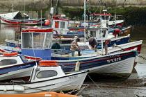 Fishermen filleting fish onboard their boat in the harbour, Staithes, North Yorkshire. - John Harris - 2000s,2007,boat,boats,coast,coastal,coasts,crew,crewman,crewmen,crewmenmaritime,EBF Economy,fish,fisherman,fishermen,fishes,Fishing Industry,fleet,harbor,harbors,harbour,harbours,inshore,job,jobs,LAB
