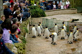 Visitors watching King Penguins, Penguin enclosure Bourton on the Water Bird Gardens. - John Harris - 16-08-2004