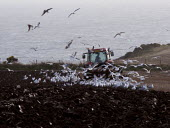 Ploughing the fields, St Brides Bay, Pembrokeshire - John Harris - 2000s,2008,agricultural,agriculture,animal,animals,Bay,bird,birds,Brides,capitalism,capitalist,coast,coastal,coasts,driver,drivers,driving,EBF,EBF Economy,Economic,Economy,employee,employees,Employmen