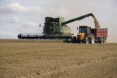 Harvesting wheat on a farm in Worcestershire using a combine harvester, a tractor and trailer - John Harris - ,2000s,2009,agricultural,agriculture,capitalism,capitalist,cereal crop,country,countryside,crop,crops,driver,drivers,driving,EBF,Economic,Economy,employee,employees,Employment,farm,Farm Worker,farm wo
