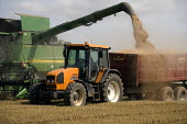 Spilling the load. Harvesting wheat on a farm in Worcestershire using a combine harvester, a tractor and trailer - John Harris - 2000s,2009,agricultural,agriculture,capitalism,capitalist,cereal crop,country,countryside,crop,crops,driver,drivers,driving,EBF,Economic,Economy,employee,employees,Employment,farm,Farm Worker,farm wor