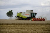 Combine harvester cutting wheat, Rutland. - John Harris - 2000s,2009,agricultural,agriculture,capitalism,capitalist,cereal crop,Combine Harvester,crop,crops,cutting,driver,drivers,driving,EBF,Economic,Economy,employee,employees,Employment,farm,Farm Worker,fa