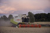 Combine harvester cutting wheat, Rutland. - John Harris - 2000s,2009,agricultural,agriculture,capitalism,capitalist,cereal crop,Combine Harvester,crop,crops,cutting,driver,drivers,driving,dusk,EBF,Economic,Economy,employee,employees,Employment,EVENING,farm,F